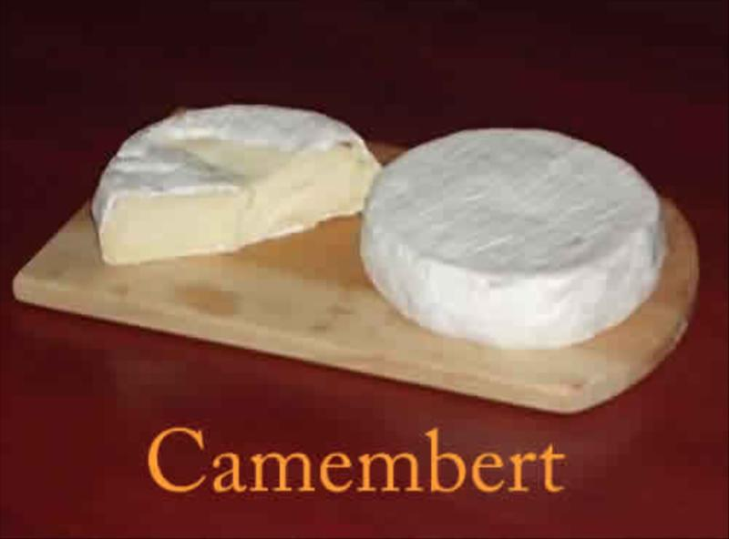 Camembert Organic White Mold Gourmet Cheese Homemade Artisan Cheese in Biosphere Ecosystem of Nilgiris   at Acres Wild Cheesemaking Farmstay, Coonoor, India