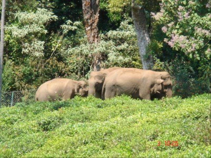 Elephantsat Acres Wild Cheeesmaking Farmstay in Coonoor, India