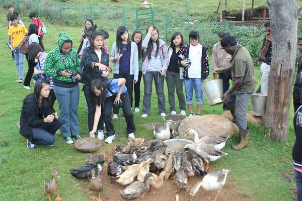 Visitors School Kids Feed Ducks Geese Farm Animals